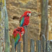 Parrots, Doue-la-fontaine Zoo, Loire, France Art Print