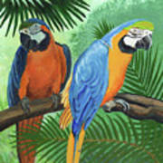 Parrots In Light And Shade Art Print