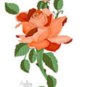 Party Colored Rose Art Print