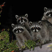 Party Of Five On The Roof Top Art Print