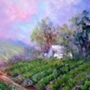 Paso Vineyard Art Print