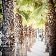 Pass Of Palms Art Print