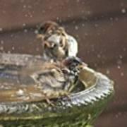 Pass The Towel Please: A House Sparrow Art Print