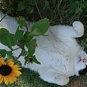 Passed Out Under The Daisies Art Print