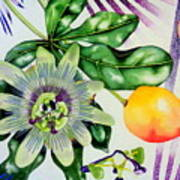 Passion In The Tropics Art Print