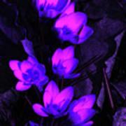 Passionate Blooms Art Print
