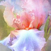 Pastel Iris Pleasure Art Print