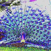 Pastel Peacock Art Print