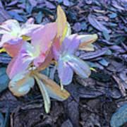 Pastel Petals Art Print