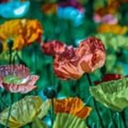 Pastel Poppies On Blue Haze Art Print