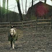 Pasture Pony Art Print