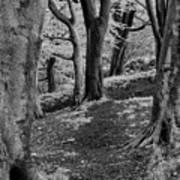 Path In Crownest Woods Art Print
