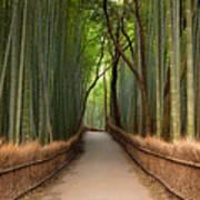 Path Through A Bamboo Grove In Kyoto Art Print