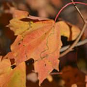 Path Through A Leaf Art Print