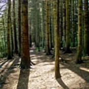 Path Through The Woods. Art Print