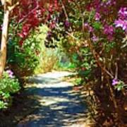 Path To The Gardens Art Print