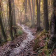 Path Trough The Woods Art Print