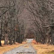 Pathway Through The Trees Art Print