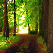 Pathway To Light Art Print
