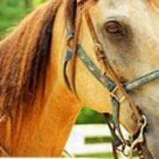 Patient Horse Art Print