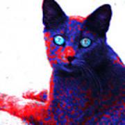 Patriotic Cat Art Print