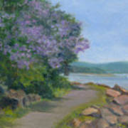 Paulownia Along The Nyack Trail Art Print