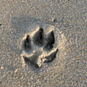 Pawprint In The Sand Art Print