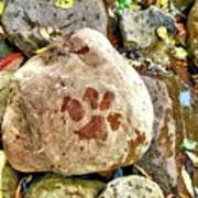 Paws On The Rocks Art Print