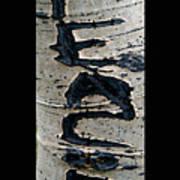 Peace Written In The Trees 4 Art Print