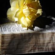 Peaceful Reading Art Print