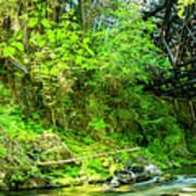 Peaceful Small Creek Under Kinsol Trestle, Vancouver Island, Bc, Canada 1. Art Print