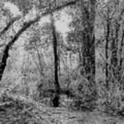 Peaceful Trees Art Print