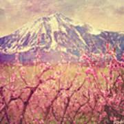 Peach Booms And Mount Lamborn Art Print