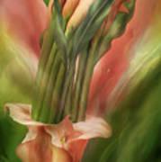 Peach Calla Lilies In Calla Vase Art Print