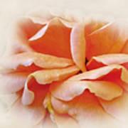 Peach Delight Art Print by Kaye Menner