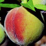 Peach Fuzz Art Print