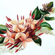 Peachy Ixora Art Print