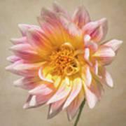 Peachy Pink Dahlia Close-up Art Print