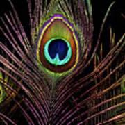 Peacock 6 Art Print