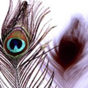 Peacock 8 - Doppleganger Art Print