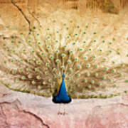 Peacock Bird Textured Background Art Print