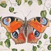 Peacock Butterfly-jp3878 Art Print
