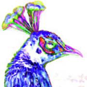 Peacock Closeup Art Print