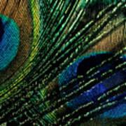 Peacock Eyes Art Print