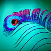 Peacock Feathers 5 Art Print