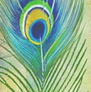 Peacock Feathers-jp3609 Art Print