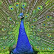 Peacock In A Oak Glen Autumn 3 Art Print