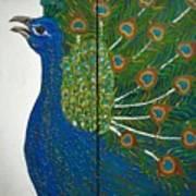 Peacock Iv Art Print