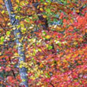 Peak Color Art Print