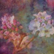 Pear Blossom Morning Impression 8941 Idp_2 Art Print